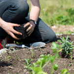 New sustainability funding empowers faculty to create farm-based learning experiences for students