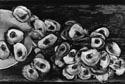 raymond oysters