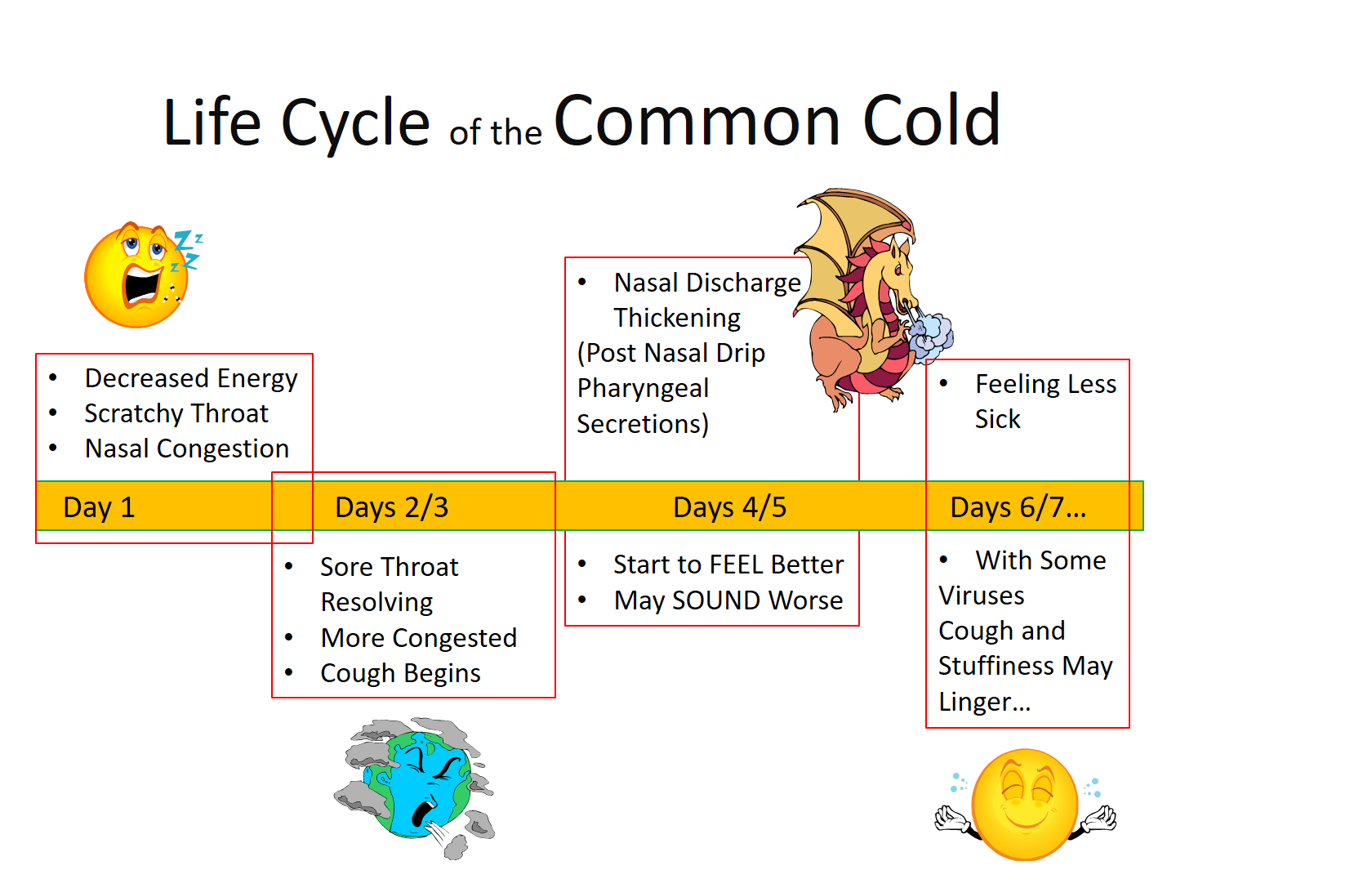 Life Cycle of the Common Cold